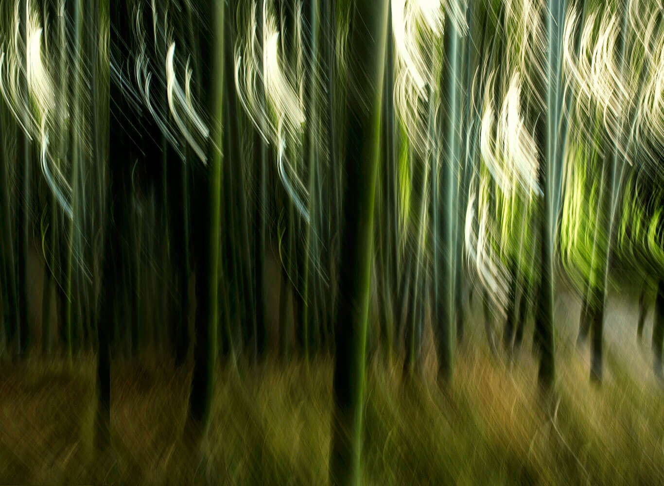 24_Breeze-in-bamboo-grove_07